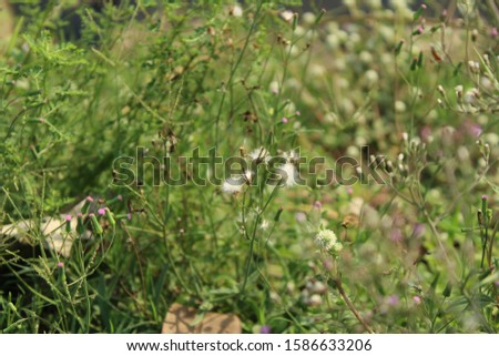 wild flowers blooming colorful in the fields #1586633206