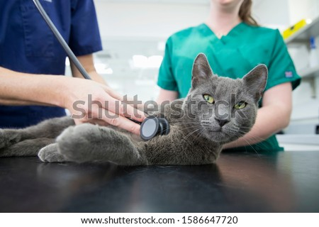 Vet examining pet cat with stethoscope on table in surgery #1586647720