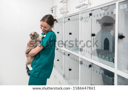 Nurse holding pet cat in recovery room of vet surgery #1586647861