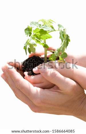 Person cupping child's hands holding plant, close-up of hands, cut out #1586664085