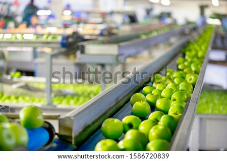 Apples Being Graded In Fruit Processing And Packaging Plant #1586720839