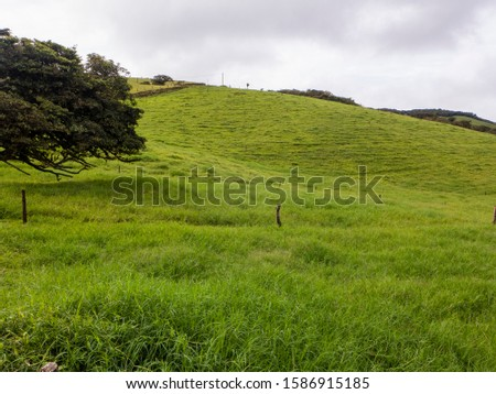 Hilly landscape in the north of Costa Rica with its lush vegetation #1586915185