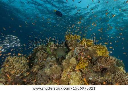 Coral reefs and water plants in the Red Sea, Eilat Israel #1586975821