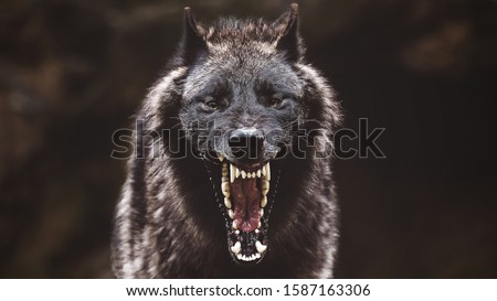 A closeup of a black roaring wolf with a huge mouth and teeth with a blurry background