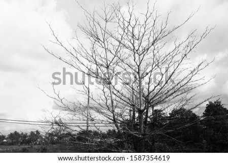 Black and White picture of a tree with no leaves