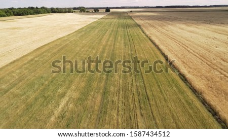 Flying over agricultural fields. In the fields are straw rolls. Warm summer day, shot under the rising sun. #1587434512