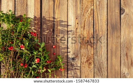 Branches of the cowberry on a rustic wooden background, overhead view. Copy space. #1587467833