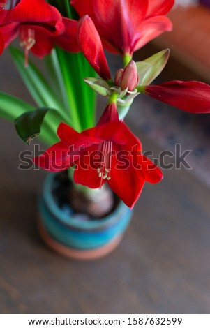 bouquet of large red blooming flowers #1587632599