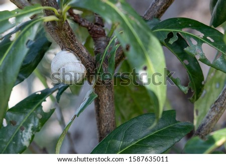 white snail on a tree and green leaves with holes close up selective focus #1587635011