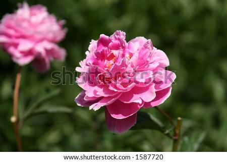 flower field #1587720
