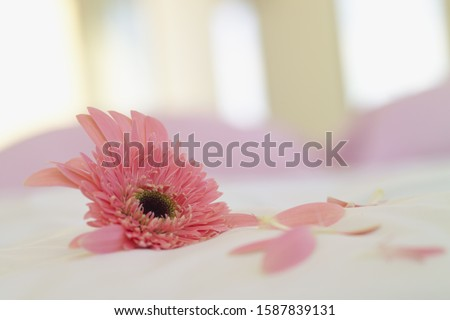 Close up of flower and petals on bed #1587839131