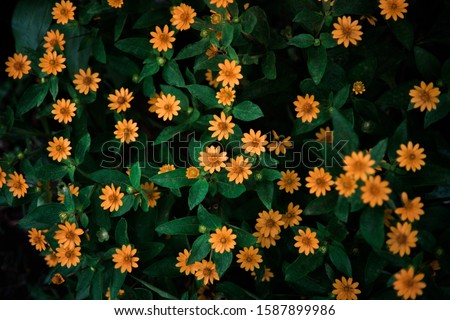 beauty flower with folk color and a yellow frame. #1587899986