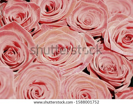 Close up of bunch of roses #1588001752