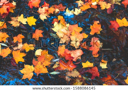 autumn leaves in water and rainy weather #1588086145