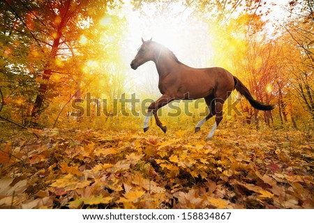 Beautiful autumn background - brown horse running in park, yellow, orange, red leaves, bright sunny fall day in park, picture for chinese year of horse 2014