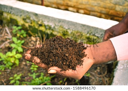 Farmer holding pile of vermicompost. Male agronomist showing compost manure. Can be use as fertilizer to accelerate the growth of plant in organic farming. Organic farming concept. agriculture backgro #1588496170