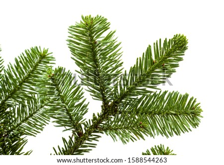 branch of noble fir, Abies procera, isolated on white background #1588544263