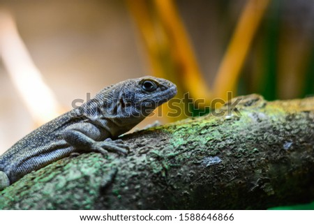 World of reptiles. Picture of small lizard climbing tree trunk and looking with clever expression if there is any danger over blurred nature background.