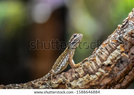 World of reptiles. Picture of small multicolored lizard climbing tree trunk and looking cautiously if there is any danger.