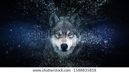 Wolf wallpaper with decay effect,  #1588835818