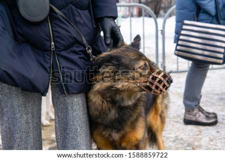 scared dog in muzzle snuggles up to owner's hip outdoor #1588859722