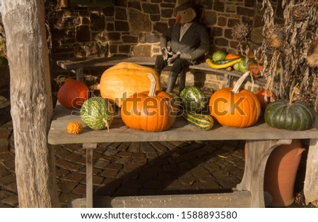 Display of Winter Squash on a Wooden Table by a Summer House with a Scarecrow in the Background on a Bright Sunny Autumn Day in a Country Cottage Garden #1588893580