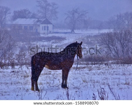 A fabulous winter picture of a horse walking in the evening in a blizzard in countryside