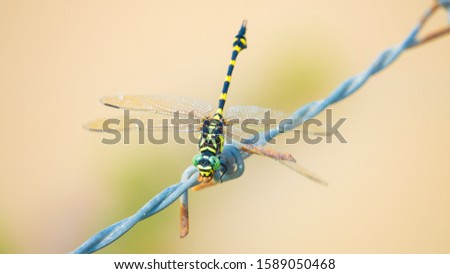 Dragonfly showing of eyes and wings detail.Macro shots, Beautiful nature scene dragonfly. #1589050468
