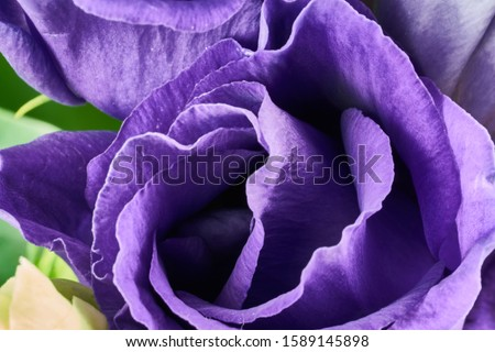violet eustoma flowers close up macro shot Royalty-Free Stock Photo #1589145898