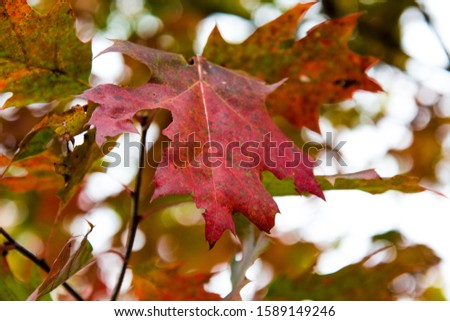 Autumn Leaves Fall Color Harvest #1589149246