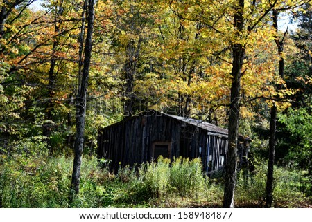 Fall Shack in the woods #1589484877