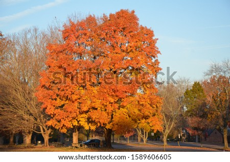 bright orange and yellow tree in park #1589606605