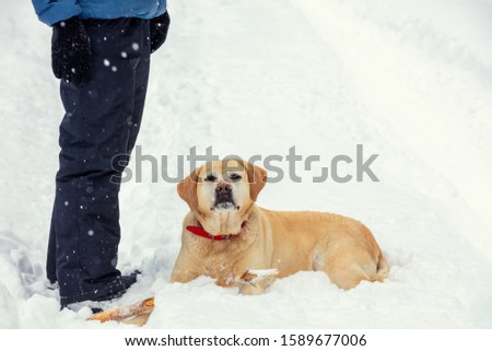 Man and dog stay in snowy forest in winter in deep snow. Labrador retriever dog looks at camera #1589677006