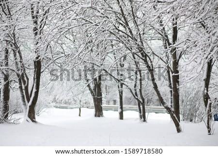 Winter landscape. Forest under the snow. Winter Park. #1589718580