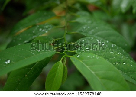 Some green leaves and water foam in the middle with a natural background #1589778148