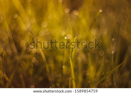 Textured nature background with grass, dew drops, beautiful bokeh. Organic texture close up.  #1589854759