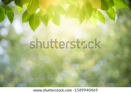 Closeup nature view of yellow green leaf on blurred greenery background in garden with copy space for text using as summer background natural green plants landscape, ecology, fresh wallpaper  concept. #1589940469
