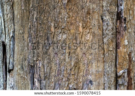 Old wooden tree texture grunge and vintage background #1590078415
