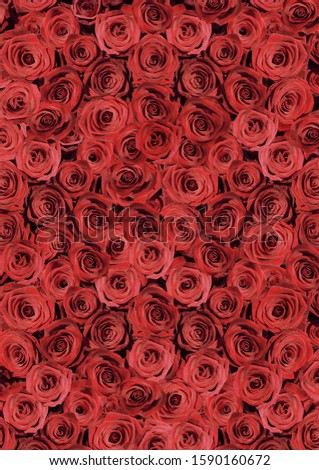 High angle view of many red roses #1590160672