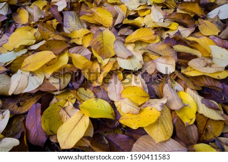 Fall Leaves On The Ground in The Northwest #1590411583