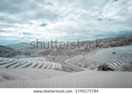 Beautiful rice terraces in Pa Bong Piang, the rural village in Chiangmai, Thailand in infrared photography