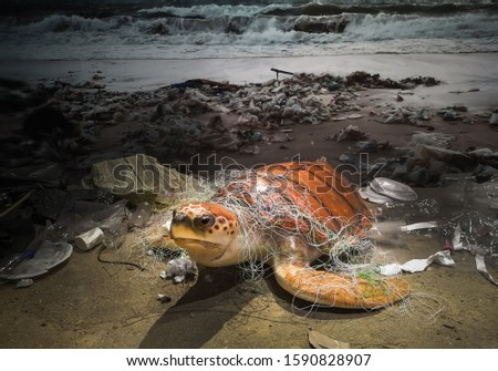 Sea turtles and garbage shown in the museum Royalty-Free Stock Photo #1590828907