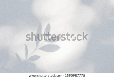 Leaves shadow background. Natural leaves tree branch shadows and sunlight dappled on white concrete wall texture for background wallpaper and any design