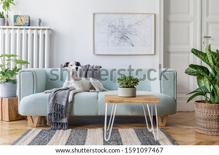 Stylish scandinavian living room interior of modern apartment with mint sofa, design coffee table, furnitures, plants and elegant accessories. Beautiful dog lying on the couch. Home decor. Template. #1591097467