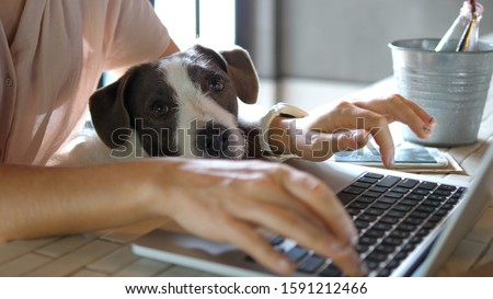 Female Hands Working On Laptop With Cute Dog #1591212466
