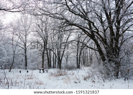 A resting place among the winter forest #1591321837