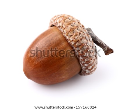One acorn in closeup Royalty-Free Stock Photo #159168824