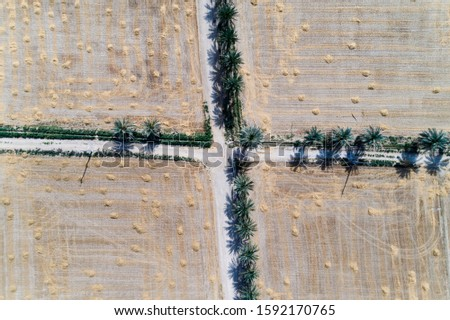arial shot from Wheat field and date trees #1592170765