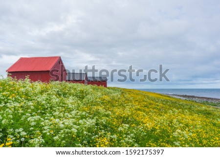 Red sheds on a flower meadow. Yellow flowers and a blue sky with grey clouds. At Lofoten Islands. #1592175397