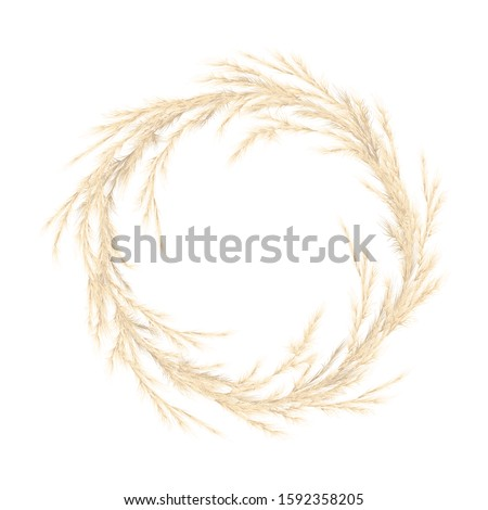Pampas grass golden wreath. Vector illustration. panicle Cortaderia selloana South America. festive decoration template. feathery grass head plumes, for Floral arrangements, ornamental displays, print #1592358205